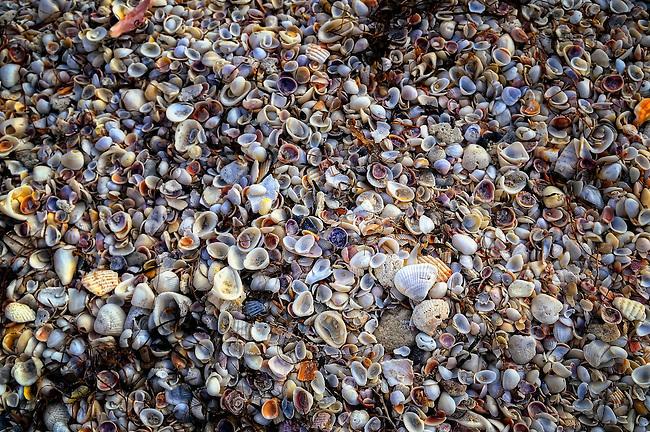 Colorful shells on Nokomis Beach in Casey Key, FL
