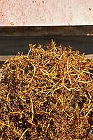 grape stems quinta de sao jorge alentejo portugal