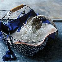 Europe/France/Bretagne/29/Finistère/Concarneau :Aile  de  raie, Stylisme Valérie Lhomme//  France, Finistere, Concarneau, skate (design by Valerie Lhomme)
