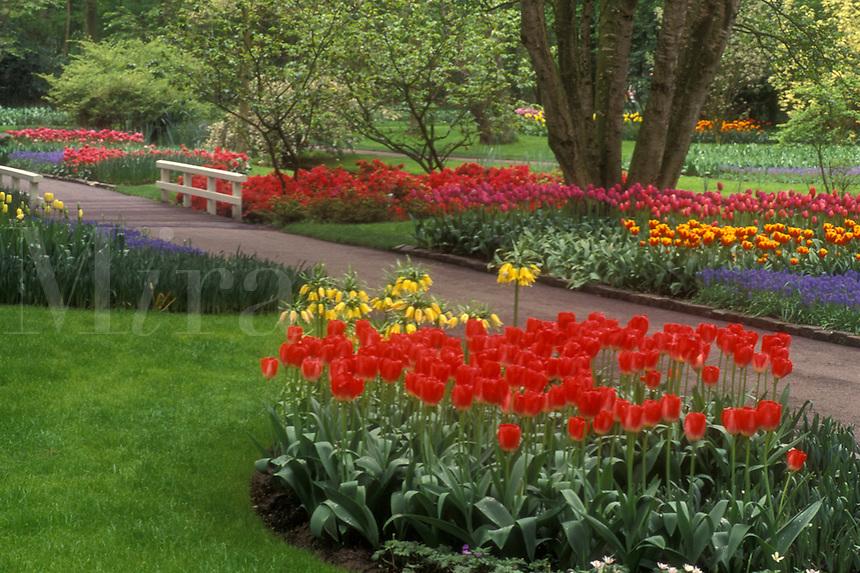 AJ0727, Netherlands, tulip, Keukenhof Gardens, Beautiful tulips adorn the grounds of Keukenhof Gardens in Lisse.