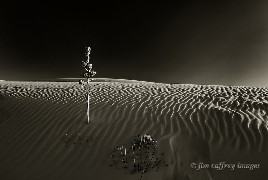 A lone, dead yucca stalk in a sand dune in White Sands National Monument at sunset.