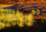 Fall landscape, Denali National Park, Alaska