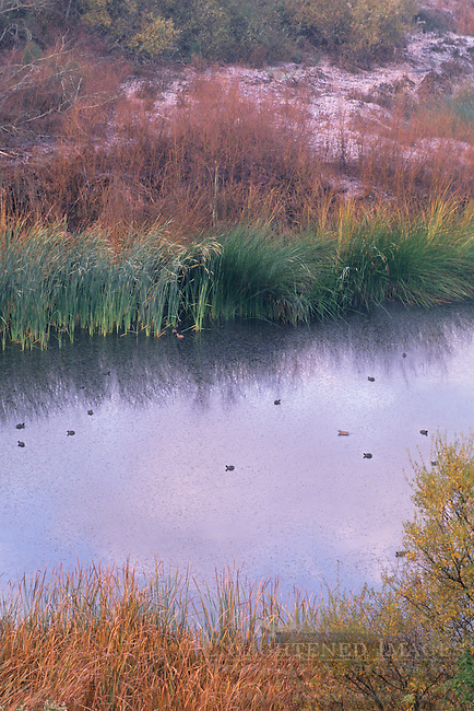 Shoreline foliage and birds in winter at the Lafayette Reservoir, Contra Costa County, CALIFORNIA