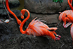 Flamingo,Audubon Zoo,New Orleans