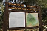 Israel, Keren Hacarmel forest on Mount Carmel