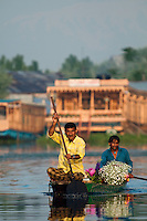 Kashmiri flower sellers paddling a traditional Kashmiri shikara, or gondola, at sunrise, Dal Lake, Srinagar, Kashmir, India..