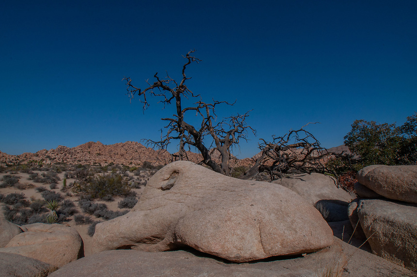 Willow Hole Trail, Joshua Tree National Park, California, US