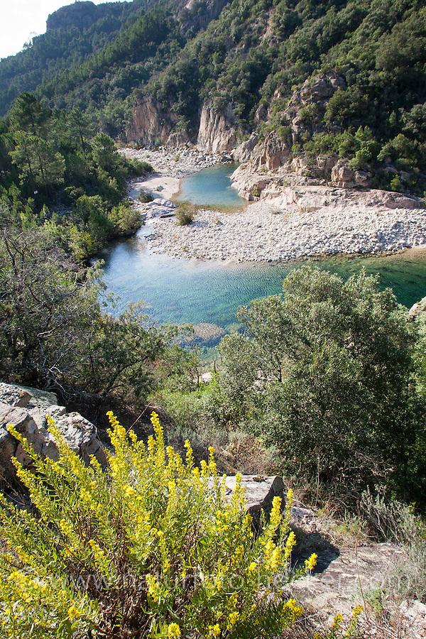 Bach, kristallklarer Bach, Gebirgsbach auf Korsika, Frankreich, mediterran. Brook, rivulet, crystal clear stream, mountain stream, Corsica, France, Mediterranean.