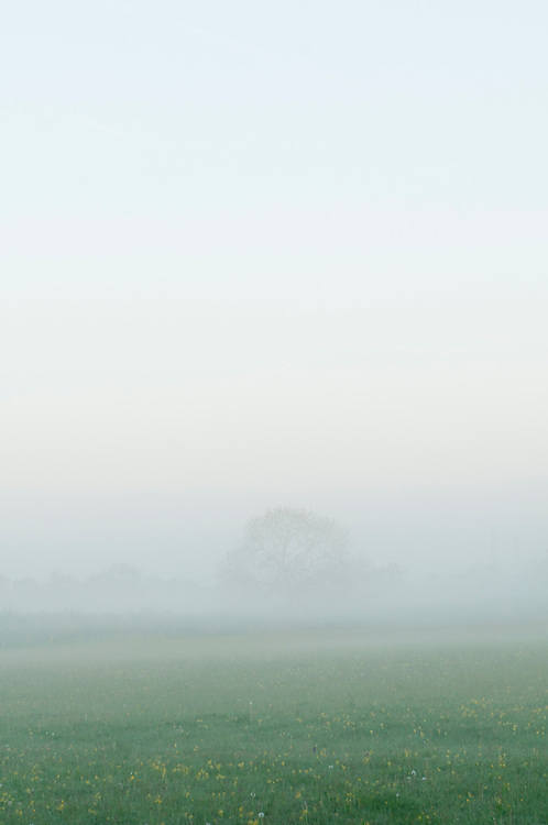 Mist over traditional hay meadow. Clattinger Farm, Wiltshire. UK. This habitat has been reduced by 98% in the UK since the Second World War. This is largely due to the intensification of farming practices.
