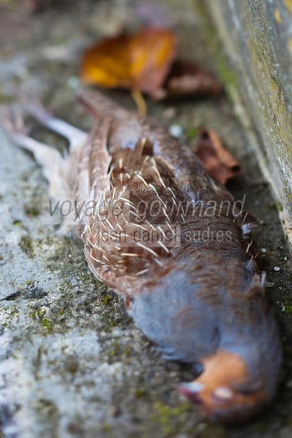 Europe/France/Centre/41/Loir-et-Cher/Sologne/Env de Bracieux:  Tableau de Chasse - Perdreau gris // Europe/France/Centre/41/Loir-et-Cher/Sologne/Near  Bracieux:  Hunting Season: grey partridge