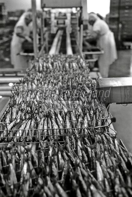 Europe/France/Bretagne/29/Finistère/Plovezet: Conserverie de Sardines Capitaine Cook / Sardines Label Rouge - Sur la Chaine d'ététage et d'éviscerage