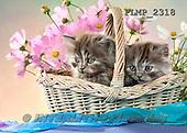 Marek, ANIMALS, REALISTISCHE TIERE, ANIMALES REALISTICOS, cats, photos+++++,PLMP2318,#a#