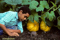 1R14-010z  Eastern Box Turtle - being watched by boy in garden near pumpkins - Terrapene carolina