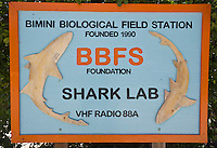 RW51211-D. Marine biologists at the Bimini Biological Field Station, also known as the Shark Lab, study a variety of shark species, including lemons, tigers, and great hammerheads. Bimini, Bahamas, Atlantic Ocean.<br /> Photo Copyright &copy; Brandon Cole. All rights reserved worldwide.  www.brandoncole.com