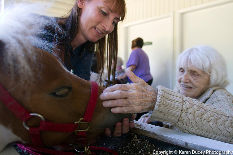 Miniature horses visit with residents at the Park Ridge Skilled Nursing Center in Shoreline, Washington on July 10, 2014. Veterinarian Dana Bridges Westerman arranges the therapy visit every year. Tiny Bubbles, a dwarf mini horse lets herself be petted.