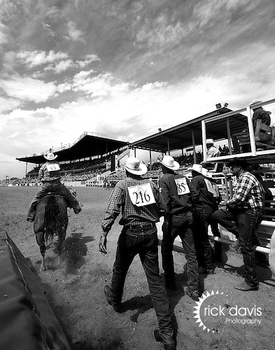 Under the big Wyoming skies Professional Rodeo Cowboy Association steer wrestler Jade Barry of Interior, South Dakota makes a hasty exit out of the box on his way to an 8.6 second run at the 112th Annual Cheyenne Frontier Days Rodeo in Cheyenne, Wyoming on July 20, 2008. Cheering on Jade are fellow steer wrestling competitors Blake Mindmann, Jason Cooper, Bill Boyce and Ivan Teigan. Jade's 8.6 second run at Cheyenne was the fast time of the second performance, and places him in good position to make the final round performance.