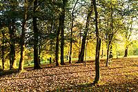 Autumn woodland in Queen's Park, Glasgow