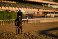 ELMONT, NY - JUNE 09: Champion filly Songbird gallops for the Ogden Phipps Stakes at Belmont Park on June 9, 2017 in Elmont, New York. (Photo by Alex Evers/Eclipse Sportswire/Getty Images)