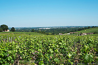 vineyard chateau villars fronsac bordeaux france