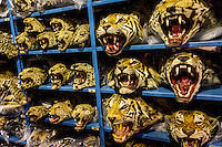 Tiger and Leopard heads seized by the US customs and stored by the U.S. Fish & Wildlife Service warehouse in Denver.
