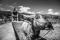 Water Buffalo, Tuk Tuk, Lake Toba (Danau Toba), North Sumatra, Indonesia