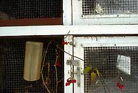 East Greenbush, Rensellaer County, New York, Small animalcoop on the Worthman Farm.