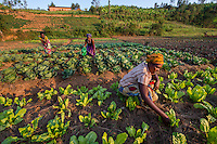 Africa, Rwanda, Kiyumba, Muhango District. Women for Women project. Women working in the agricultural co-op farm with vegetables they sell in the local market. Clarisse Kayitegere (30), 1 5 yr old child.