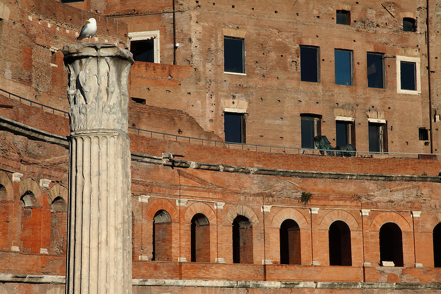 Rome, Fora: A broaden view of the ancient markets on the back of the large oriental exedra of the Forum of the emperor Trajan (end of the I century AD), with a Corinthian capital on the top of a column in the Forum in foreground, on the left. There is a seagull on the capital. Digitally Improved Photo.