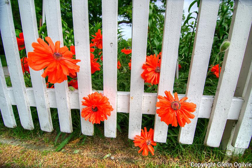 Communities in Bloom Garden Tour.