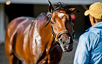 LOUISVILLE, KENTUCKY - MAY 01: Patch, owned by Calumet Farm and trained by Todd Pletcher, gets a bath after exercising in preparation for the Kentucky Derby  during Kentucky Derby and Oaks preparations at Churchill Downs on May 1, 2017 in Louisville, Kentucky. (Photo by Scott Serio/Eclipse Sportswire/Getty Images)