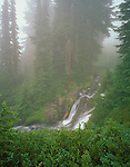 Mount Rainier National Park,  WA  <br /> Waterfalls on the Paradise River cascading through a foggy evergreen forest