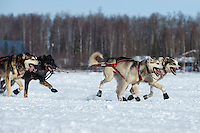 Dallas Seavey dogs on the trail on Long Lake during the restart of the Iditarod at Willow on Sunday, March 3, 2013.