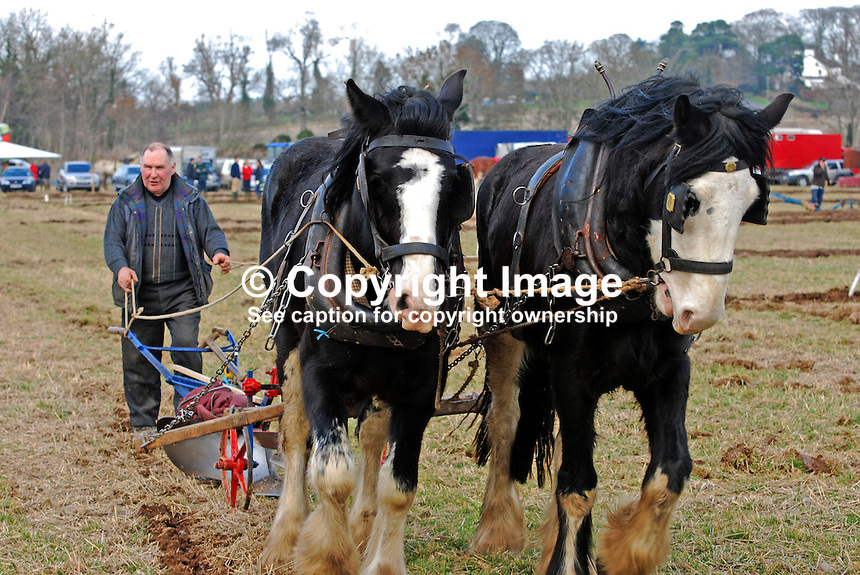 Competitor in action with team of horses. Taken 28 February 2009 at 95th annual ploughing match of Mullahead & District Ploughing Society, Co Down, N Ireland, UK, 200902281924..Copyright Image from Victor Patterson, 54 Dorchester Park, Belfast, UK, BT9 6RJ..Tel: +44 28 9066 1296.Mob: +44 7802 353836.Voicemail +44 20 8816 7153.Skype: victorpattersonbelfast.Email: victorpatterson@mac.com.Email: victorpatterson@ireland.com (back-up)..IMPORTANT: If you wish to use this image or any other of my images please go to www.victorpatterson.com and click on the Terms & Conditions. Then contact me by email or phone with the reference number(s) of the image(s) concerned.