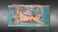 Mycenaean Fresco wall painting of a Mycanaean acrobat leaping over a bull, Early Palace,  Tiryns, Greece.  Athens Archaeological Museum. Grey art Background <br /> <br /> 14th  Cent BC.. Cat No 1595. The Mycenaean Fresco depicts an acrobat leaping over a charging bull whilst holding onto its horns. This ritual symbolised the struggle of domination of man over wild nature.
