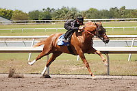 #48Fasig-Tipton Florida Sale,Under Tack Show. Palm Meadows Florida 03-23-2012 Arron Haggart/Eclipse Sportswire.