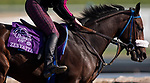 October 27, 2019 : Zellda exercises in Zenyatta's Saddle Cloth at Santa Anita Park in Arcadia, California on October 27, 2019. Carolyn Simancik/Eclipse Sportswire/Breeders' Cup/CSM