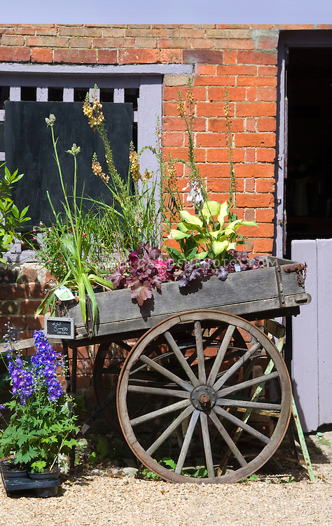 Farm cart antique wood with wagon wheels in front of rustic brick farm building barn trimmed in lavender color, with plants for sale