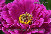 Gisela, FLOWERS, BLUMEN, FLORES, photos+++++,DTGK1997,#f#