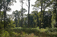FOREST_LOCATION_90142