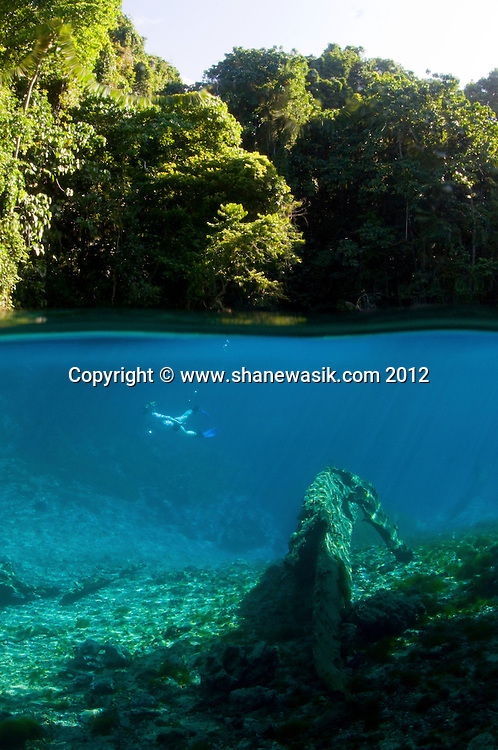 In the middle of the jungle, lies iridescent azure blue spring water. Visibility was in excess of 50m and the surroundings spectacular!!
