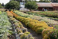Edible flowers in farm field row, Viridian Farms, Oregon