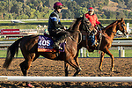 ARCADIA, CA  OCTOBER 31. Breeders' Cup Filly & Mare Turf entrant Just Wonderful, trained by Aidan P. O'Brien,  exercises in preparation for the Breeders' Cup World Championships at Santa Anita Park in Arcadia, California on October 31, 2019.  (Photo by Casey Phillips/Eclipse Sportswire/CSM)