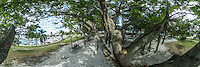 Sitting under Banyan Trees, Bayshore, Sarasota, Florida, March 2016.  360 degree panoramic scene photographed with a 360 degree camera.  (Photo by Brian Cleary/ www.bcpix.com)