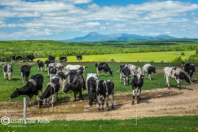 Farmland in Patten, Maine, USA