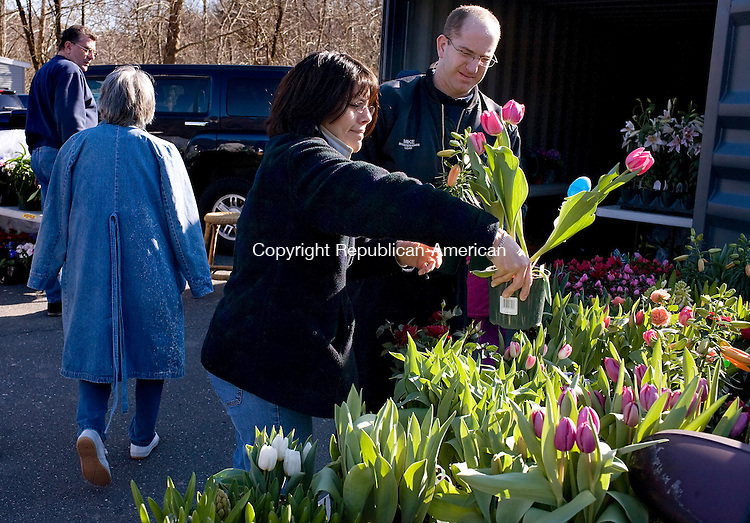 MIDDLEBURY--21 March 2008--032108TJ01 - Kim Nicholas, center, from Beacon Falls, picks out a tulip with her husband Mike at the Beacon Falls Lions Club Easter flower sale on Friday, March 21, 2008. The Lions Club will be selling flowers tomorrow along North Main Street between 9 a.m. and 6 p.m. (Photo by T.J. Kirkpatrick/Republican-American)