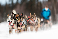 Jessie Holmes team runs on the trail just prior to the Finger Lake checkpoint during the 2018 Iditarod race on Monday March 05, 2018. <br /> <br /> Photo by Jeff Schultz/SchultzPhoto.com  (C) 2018  ALL RIGHTS RESERVED