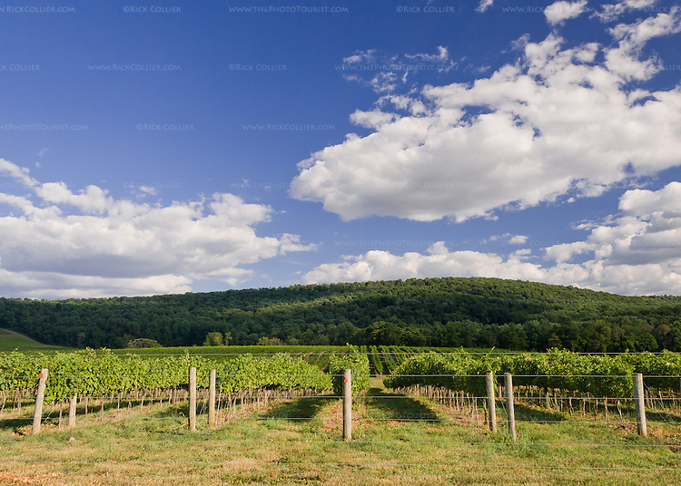 Nearby wooded hills offer a verdant backdrop to the neat rows of grape vines at Breaux Vineyards.