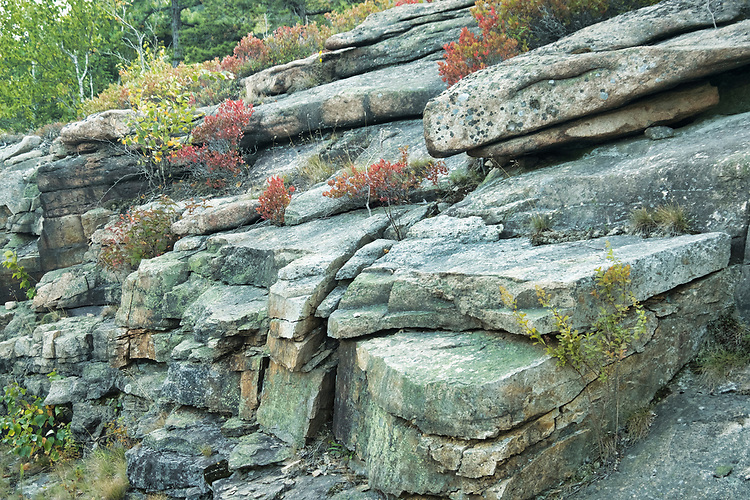 Early autumn colors begin to present themselves amongst the layered rock strata  along the Ocean Drive loop in Acadia NP.