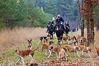 Europe/France/Centre/41/Loir-et-Cher/Sologne/Cheverny: Chasse à courre dans la forêt de Cheverny  -  avec l' Equipage de la Forêt des Loges <br /> AUTO N° 2012-446<br /> AUTO N° 2012-447<br />  //  Europe/France/Centre/41/Loir-et-Cher/Sologne/Cheverny: Riding to hound , Cheverny Forest<br /> AUTO N° 2012-446<br /> AUTO N° 2012-447
