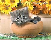 Marek, ANIMALS, REALISTISCHE TIERE, ANIMALES REALISTICOS, cats, photos+++++,PLMP2326,#a#
